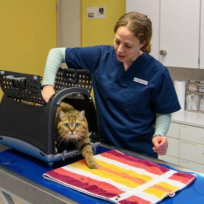 Akupunktur bei Katze